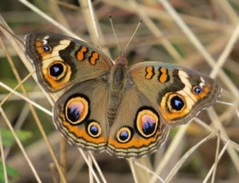 Photograph of a butterfly.